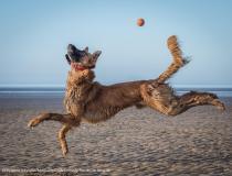 Animal Friends Comedy Pet Photo Awards 2021