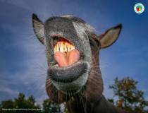 The Comedy Pet Photography Awards 2020 - Gimme a Kiss!