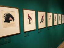Wystawa: Rośliny i zwierzęta