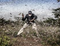 Zwalczanie inwazji szarańczy w Afryce Wschodniej
