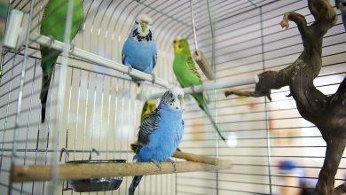 Photo of W Łodzi znaleziono papugi. Straż Miejska szuka właścicieli