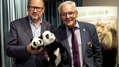 Photo of Gdańsk stara się o dwie pandy wielkie! To gatunek zagrożony wyginięciem