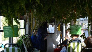 Photo of Dżungla w tramwaju [ZDJĘCIA][WIDEO]