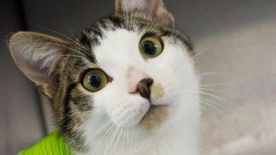 """Photo of Stołeczny punkt """"Ochota na kota"""" zaprasza w święta. Adopcja zwierząt to odpowiedzialność"""