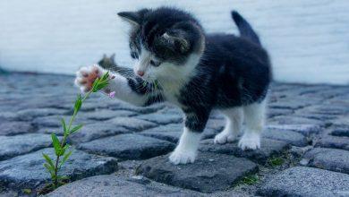 Photo of Rafał Trzaskowski apeluje: pomóżmy kotom przetrwać mrozy