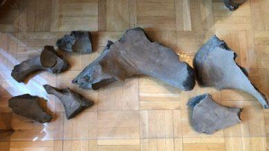 Photo of Znaleziono szczątki mamuta na budowie warszawskiego metra