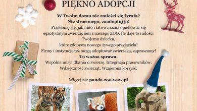 Photo of Zostań honorowym rodzicem wybranego przez siebie lokatora Warszawskiego zoo