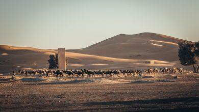 Photo of Runmageddon Sahara po raz drugi w Maroku. Zapisy ciągle trwają