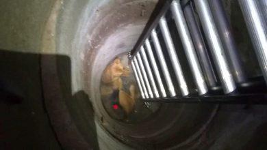 Photo of Ekopatrol i straż pożarna uratowała owczarka uwięzionego w…studzience