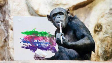 Photo of WOŚP 2019. Licytacje, obraz namalowany przez szympansicę Lucy i wiele więcej