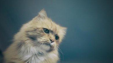 Photo of Pijani zabili kota sąsiadki. Miał zjeść im wędlinę