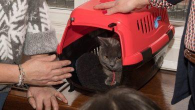 Photo of Internauci wybrali imię. Wrocek – prezydent Sutryk adoptował porzuconego kota