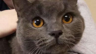 Photo of Prezydent Wrocławia Sutryk adoptował porzuconego kota. Zagłosuj i wybierz imię