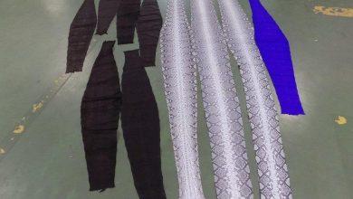 Photo of 10 skór pytona siatkowego w przesyłce. Gatunek zagrożony wyginięciem
