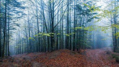 Photo of Trzy nowe parki narodowe na Ukrainie. Od 20 lat w Polsce nie powstał żaden!