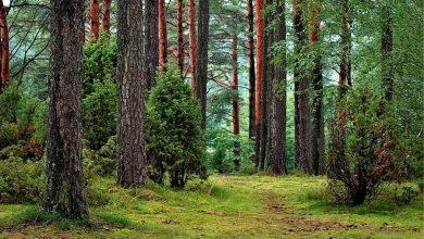 Photo of Nowe prawo uderzy w polską przyrodę! Zagrożone są obszary Natura 2000 i Parki Narodowe