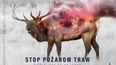 Photo of Wypalanie traw jest zabronione! Resort rolnictwa: wysoka kara grzywny i więzienie do 10 lat