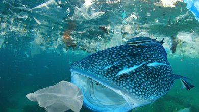 Photo of Światowy Dzień Oceanów. Działalność człowieka powodem zanieczyszczeń i zmian klimatu