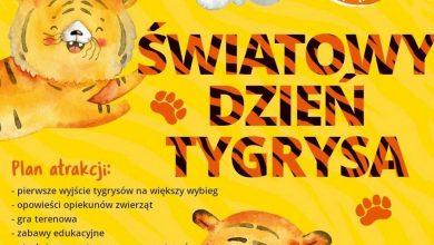 Photo of Światowy Dzień Tygrysa w gdańskim ZOO. Trzech gatunków kotów już nie zobaczymy na wolności