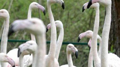 Photo of Powstanie olbrzymia woliera w tej części Europy w gdańskim zoo