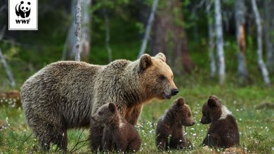 Photo of Wakacje. Sąsiedztwo wilka i niedźwiedzia. Czy mamy się ich obawiać?