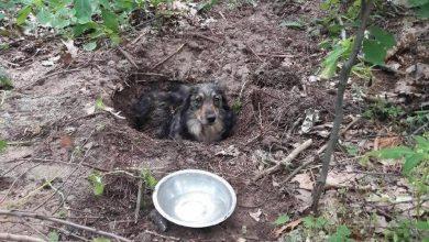 """Photo of Pies zakopany żywcem w lesie. Odkopał go spacerowicz. """"Odgłosy przypominały płacz dziecka"""""""