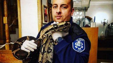 Photo of Białołęka. Trzymetrowy wąż boa, straszenie bronią i interwencja w klubie nocnym