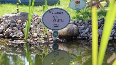 Photo of Otwarto Ogród Matyldy w gdańskim ZOO. Milczące Lasy – ptasi świat w Azji