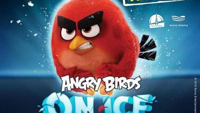 Photo of Angry Birds on Ice w Polsce. Zobacz kiedy i gdzie zobaczysz show na lodzie
