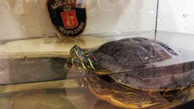 """Photo of Nieoczekiwany gość. Wędkarz liczył na """"branie"""". Dołączył do niego… żółw"""