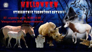 Photo of Halloween w Warszawskim ZOO. Będzie przerrrażająco i strrrasznie