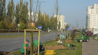 Photo of Trwa jesienne sadzenie drzew w Warszawie
