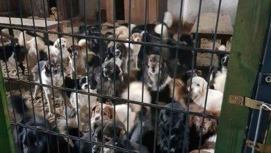 Photo of Nielegalna ferma wielorasowych psów i kotów pod Gubinem! Niemka powiązania ze środowiskami zoofilskimi?