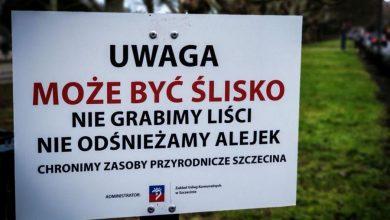 Photo of W parkach Szczecina nie grabi się liści. Ma to uratować jeże
