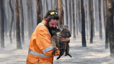 Photo of Australia płonie. Zwierzęta i rośliny endemiczne bezpowrotnie znikną z Ziemi