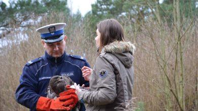 Photo of Myszołów uratowany przez policjantów wrócił na wolność [WIDEO]