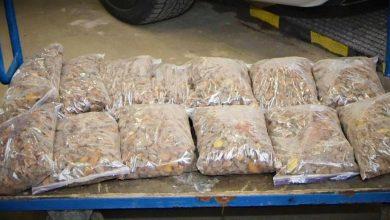 Photo of Medyka. Nerwowy kierowca chciał przemycić ponad 31 kg bursztynu
