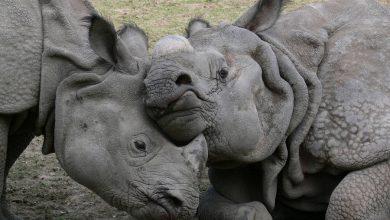 Photo of Warszawskie ZOO. 16 urodziny nosorożca Kuby i Światowy Dzień Żaby