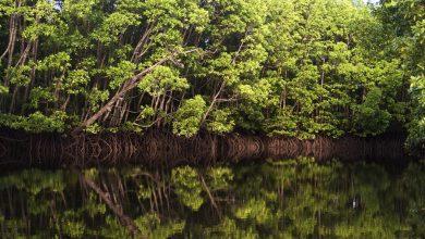 Photo of Światowy Dzień Mokradeł. Najszybciej ginące ekosystemy na świecie!