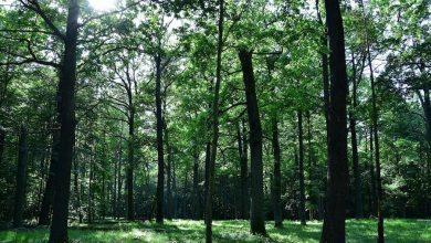 Photo of Zdrowie najważniejsze. Warszawskie drzewa zarabiają 170 mln zł rocznie
