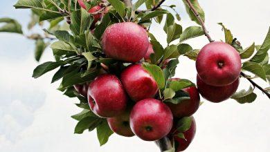 Photo of Kontrole pochodzenia warzyw i owoców w sieciach handlowych. Sklepy oszukują konsumentów