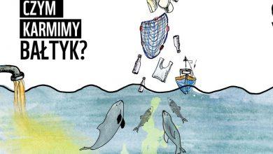 Photo of Czym karmimy Bałtyk? Coraz mniej ryb. Morze tonie w sieciach