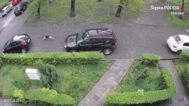 Photo of Pies osiedlowym… wandalem. Przegryzał opony w samochodach