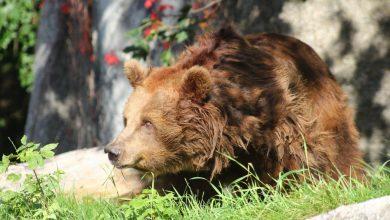 Photo of Warszawskie ZOO. Pijany 23-latek wtargnął na wybieg dla niedźwiedzi. Podtapiał zwierzę [WIDEO]