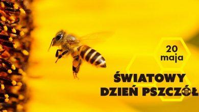 Photo of 20 maja – Światowy Dzień Pszczół. Leśnicy sadzą krzewy i drzewa miododajne