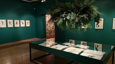 Photo of MCK. Wystawa: Rośliny i zwierzęta