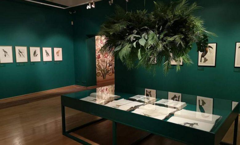 Photo of Galeria MCK w czasach pandemii. Wystawa: Rośliny i zwierzęta [ZDJĘCIA]