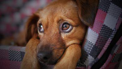 Photo of Udusił psa smyczą. Usłyszał zarzut bezprawnego zabicia zwierzęcia