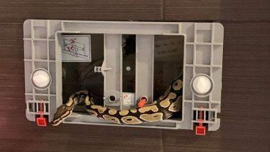 Photo of Pyton w łazience. Bawił się w kotka i myszkę ze strażakami