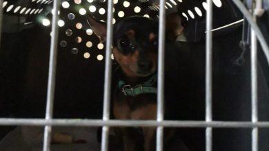 Photo of Wycieńczony pies w nagrzanym aucie. Policjanci wybili szybę